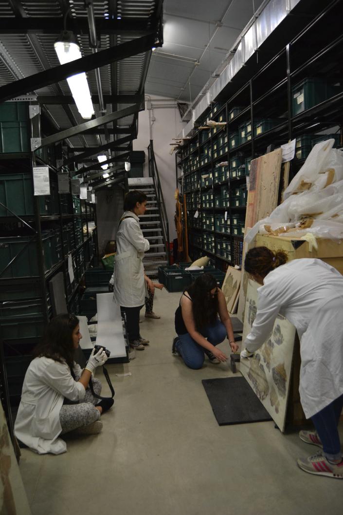 Documentazione fotografica degli affreschi staccati pertinenti al sito archeologico di Alba Fucens